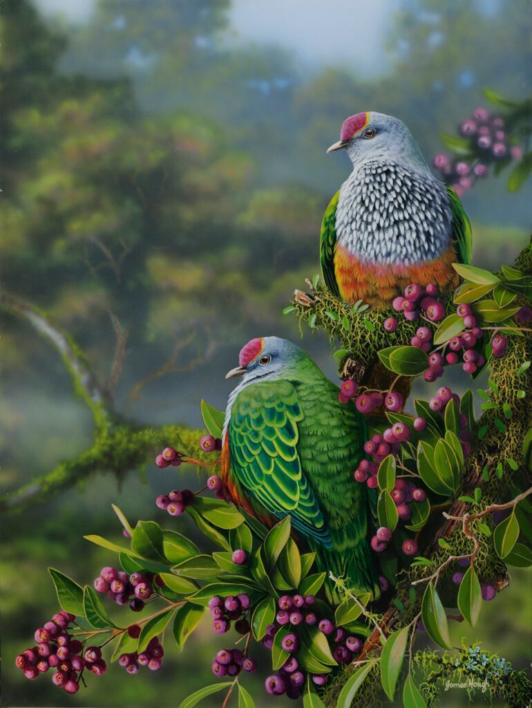 Fruit Dove painting James Hough