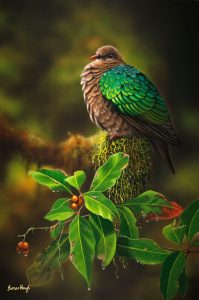 Emerald Pigeon Painting James Hough